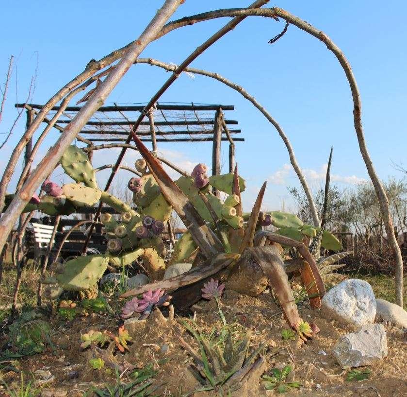 Il triangolo delle piante grasse nel Bosco di Ogigia