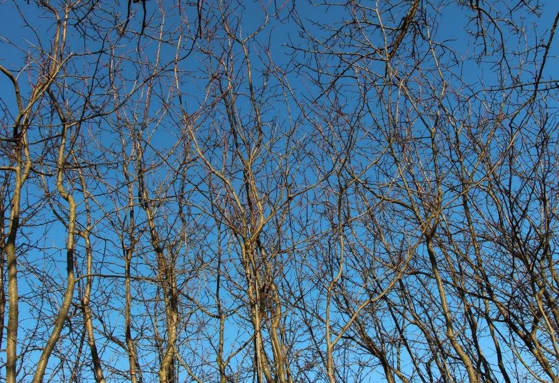 La Moscina di Montepulciano, come tutte le latifoglie, in inverno perde le sue foglie che vanno a nutrire gli abitanti del suolo