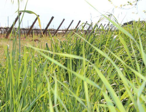 """Per favore non chiamatele """"erbacce"""" Sono le erbe spontanee del Bosco di Ogigia"""