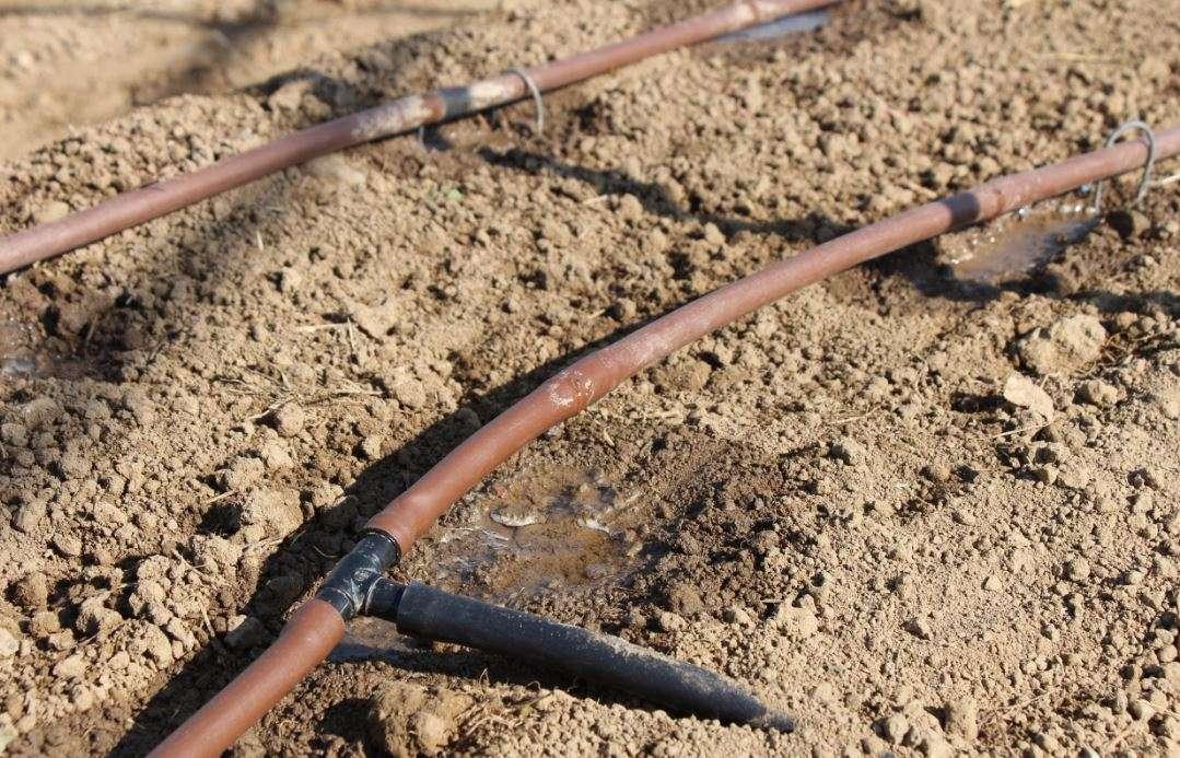 Come fare un orto sinergico in 10 passaggi la guida pratica for Diversi tipi di tubo di rame