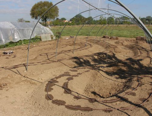 Orto sinergico: dall'irrigazione alla semina per coltivare i nostri ortaggi rispettando la natura