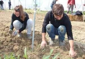 Mani nella terra per togliere tutte le erbe spontanee