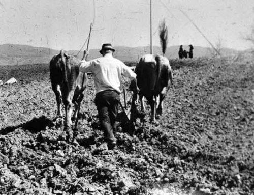 La semina del grano nel secolo scorso tra tecniche arcaiche e rivoluzione verde