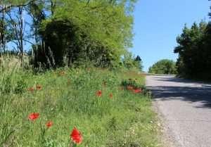 Biodiversità lungo il ciglio di una strada
