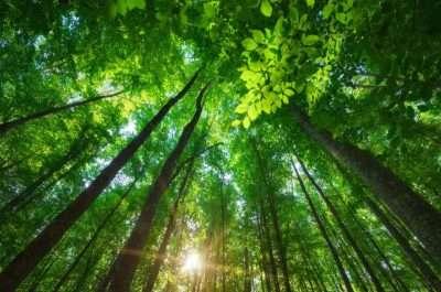 Alberi piantati da Ecosia