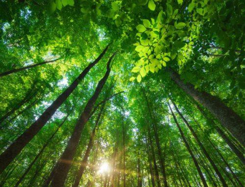 Ecosia, il motore di ricerca che pianta alberi come fare ricerche sul web e aiutare il pianeta