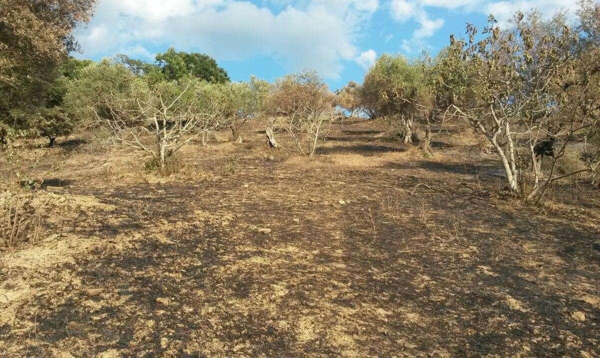 Incendio boschivo e tutela delle foreste <br><span id='secondTitolo'>la prevenzione passa dall&#039;utilizzo degli alberi</span>