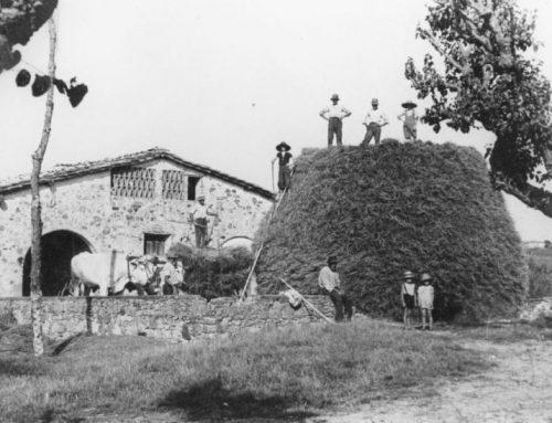 Vita contadina, la raccolta delle manne La coltivazione del grano negli anni '50 in Valdichiana
