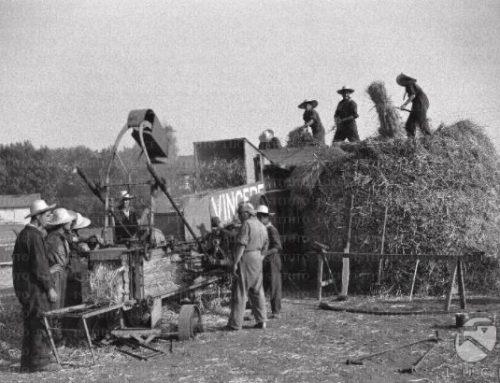 La trebbiatura in Valdichiana (I parte) Ricordi dei lavori in campagna negli anni '40 e '50