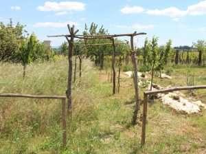 Biodiversità nel Bosco di Ogigia
