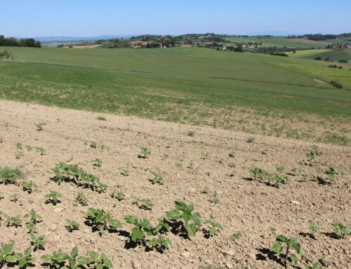 Dieci ragioni per scegliere l'agricoltura naturale e i danni che produce quella industriale
