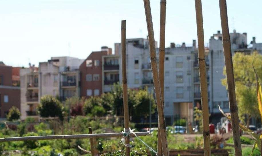 Scorcio degli orti urbani di Casal Brunori
