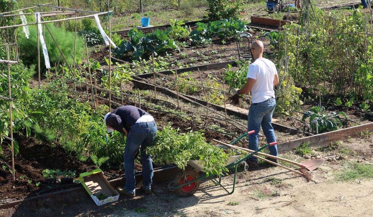 Ortolani al lavoro nel Parco Ort9 di Casal Brunori a Roma