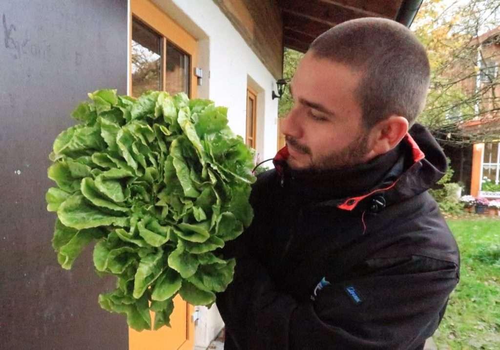 Un cesto di insalata prodotto nell'Azienda di Hubert