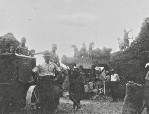 La colonna sonora della trebbiatura in Valdichiana Ricordi dei lavori in campagna negli anni '40 e '50
