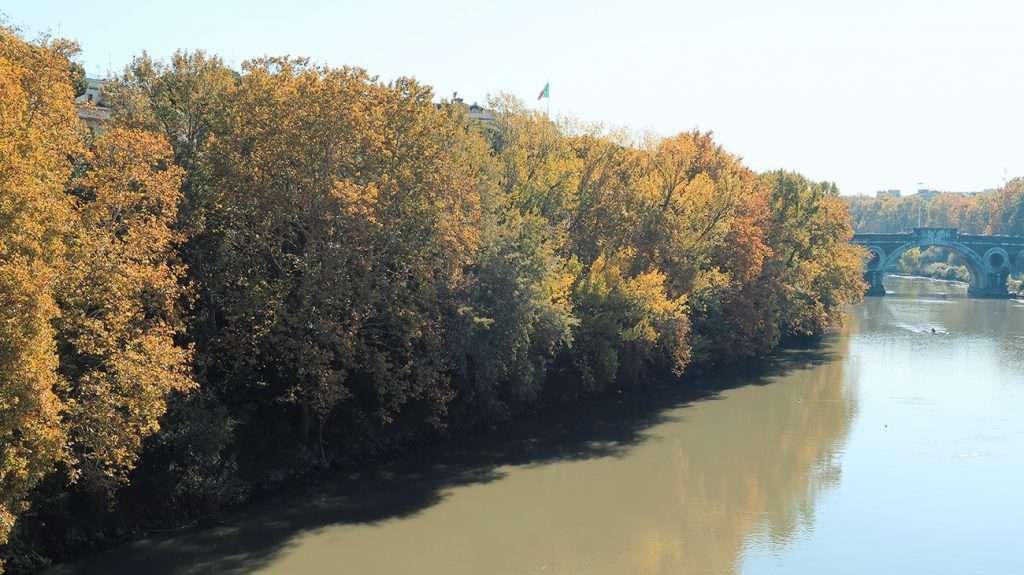 Un bosco sul Tevere