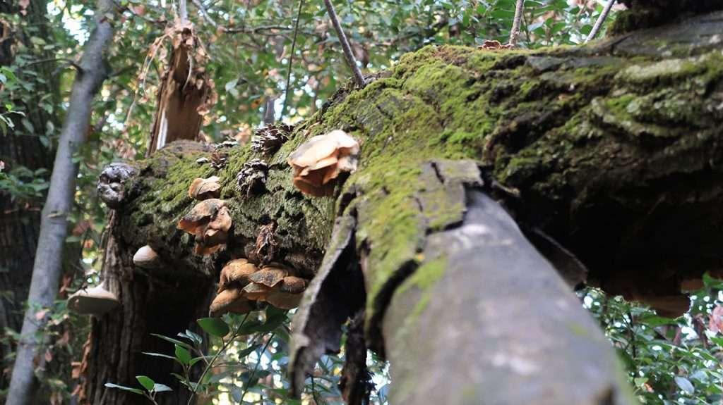 Funghi e muschio decompongono un albero morto