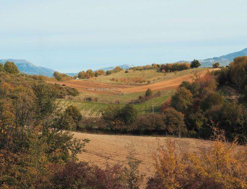 Tularù, l'azienda agricola che produce socialità tra pascoli razionali e grani antichi