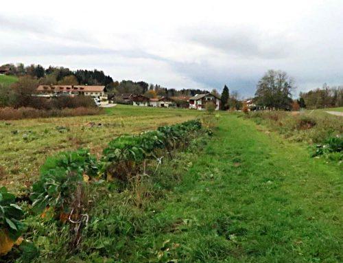Come liberare l'intelligenza delle piante L'esperienza di Hubert e del suo orto in Baviera