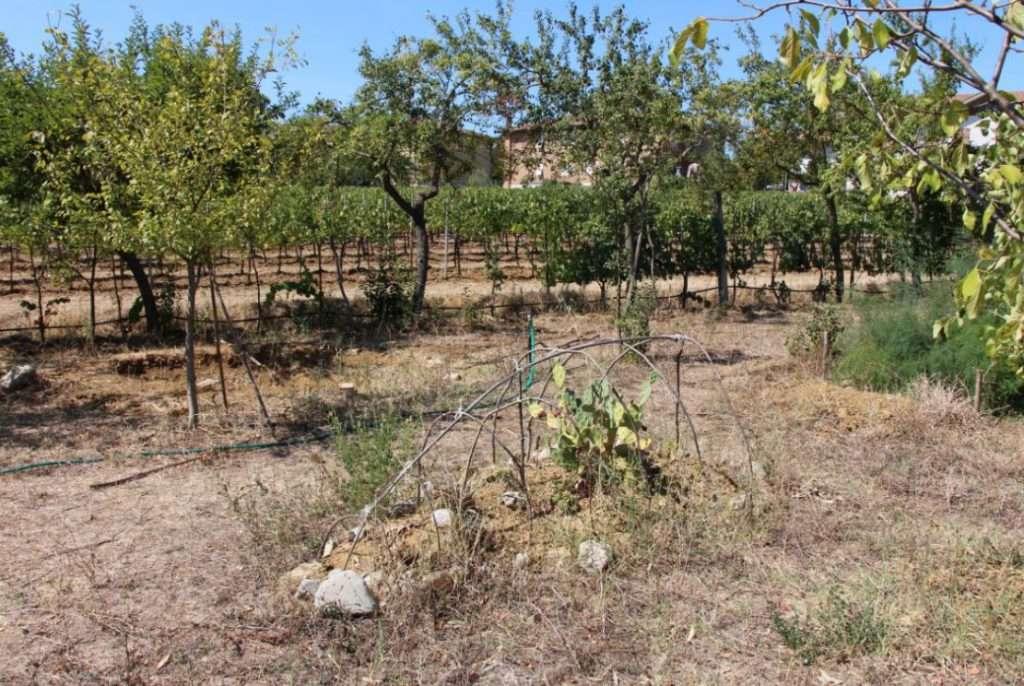 Siccità 2017: anche nel Bosco di Ogigia l'assenza di pioggia ha fatto seccare gran parte delle erbe spontanee
