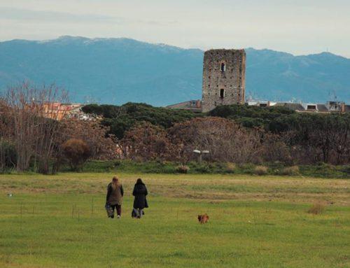 Parco di Centocelle, 120 ettari di biodiversità tra rapaci, libellule e campagna romana