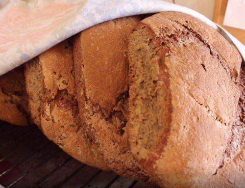 Dalla farina al pane, l'autoproduzione in Valdichiana Testimonianze di vita in campagna nel secolo scorso