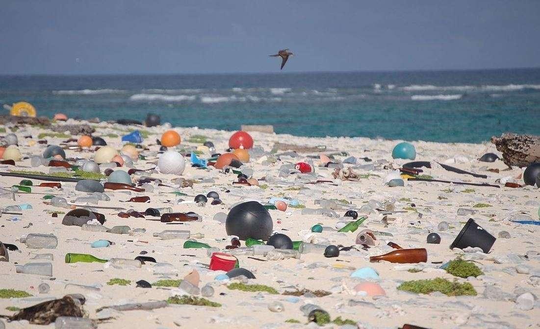 La presenza di plastica negli oceani nuoce in particolare ai pesci e agli uccelli © U.S. Fish and Wildlife Service Headquarters/Wikimedia Commons
