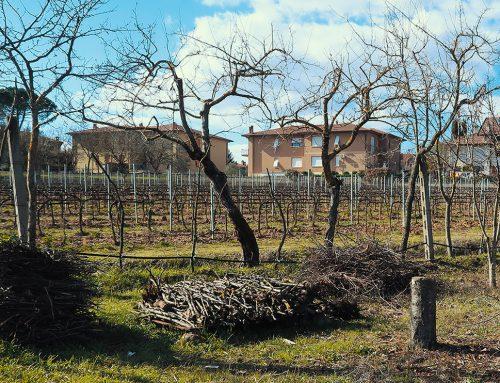 Piantare alberi, un'esperienza da non perdere Tecniche e riflessioni per un frutteto senza veleni