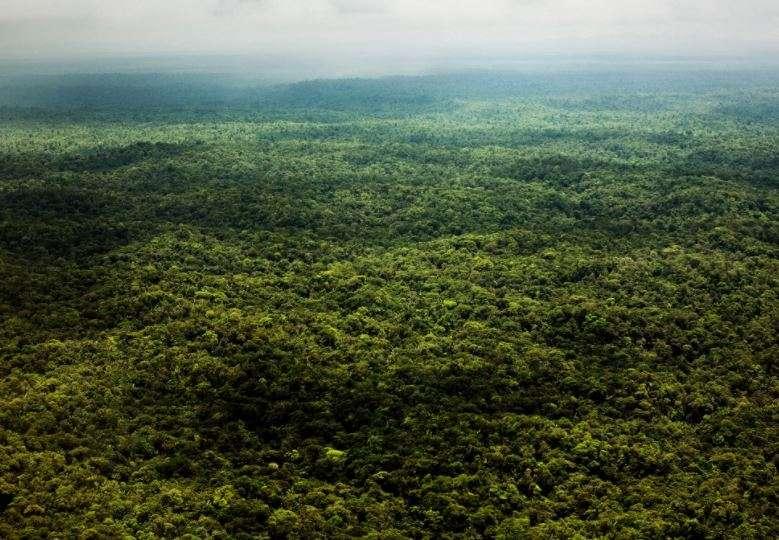 Vista dell'Amazzonia dall'alto