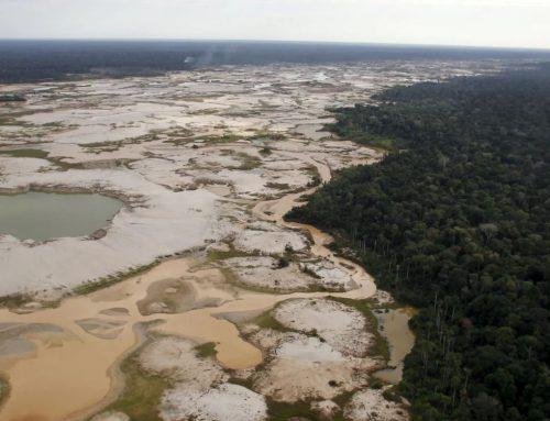 Basta una strada per distruggere una foresta Cosa accade se dividiamo in due l'Amazzonia