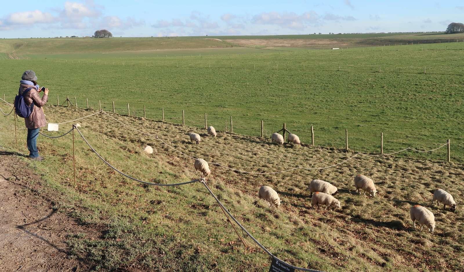 Pecore tagliaerba, venti buone ragioni <br><span id='secondTitolo'>per accoglierle in città </span>