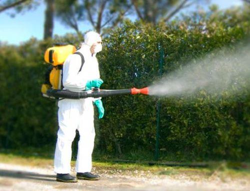 Come difendersi dagli insetti…cidi Quando il rimedio è peggiore del danno