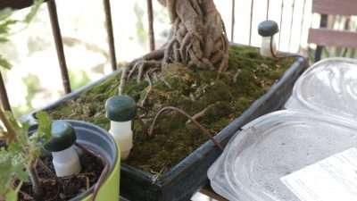 Coni in ceramica inseriti nella terra
