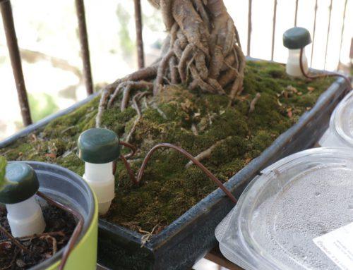 Irrigare le piante sul balcone senza rubinetto I metodi che utilizzo per le mie piante in città