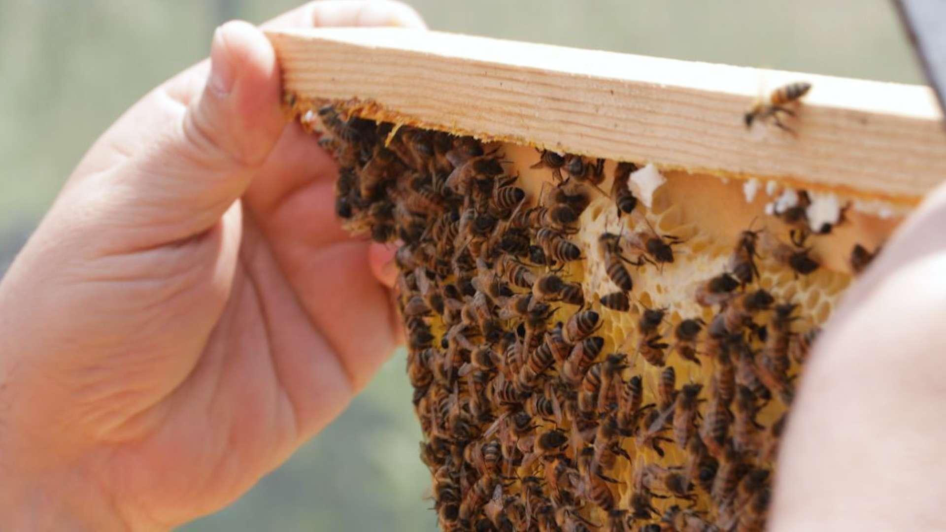 Se salviamo le api salviamo noi stessi <br><span id='secondTitolo'>Incontro con il naturalista Paolo Fontana </span>