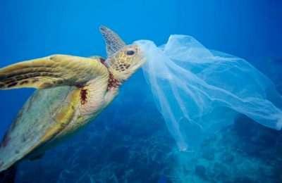 Tartaruga mangia una busta di plastica