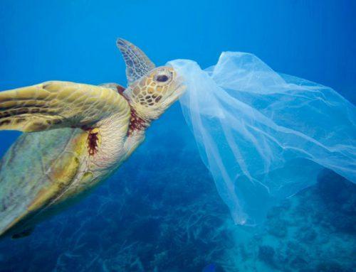 L'anno in cui il mondo disse NO alla plastica Come contribuire e dare il buon esempio