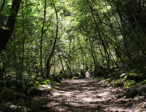 Viaggio nelle Gole del Sagittario Corridoio ecologico per gli animali d'Abruzzo