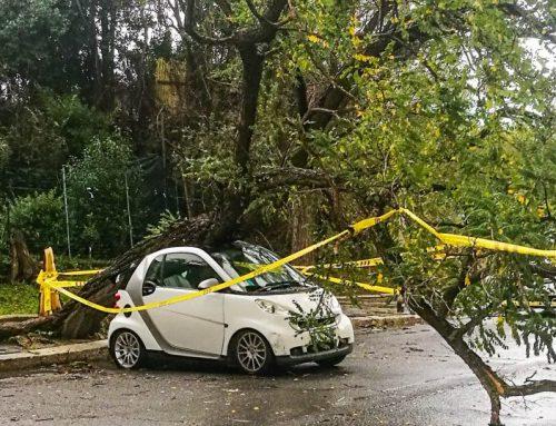 Perché cadono gli alberi colpa del vento e della nostra ignoranza
