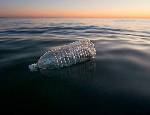 La favola di Sybilla per liberare il mare Una bottiglia parlante spiega i danni della plastica