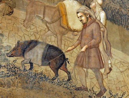 Il lavoro del norcino Utilizzi del maiale in Valdichiana negli anni '40 e '50
