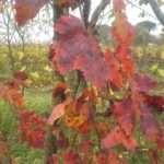 Lavori d'autunno nel Bosco di Ogigia