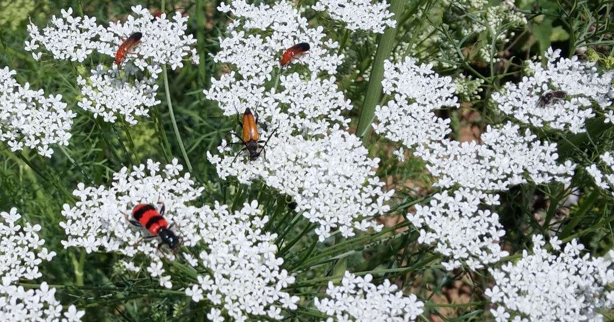 Fiori e insetti