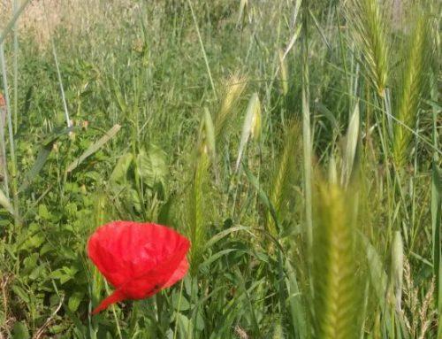 Dieci ragioni a difesa delle erbe spontanee e la battaglia per salvare quelle del Bosco di Ogigia