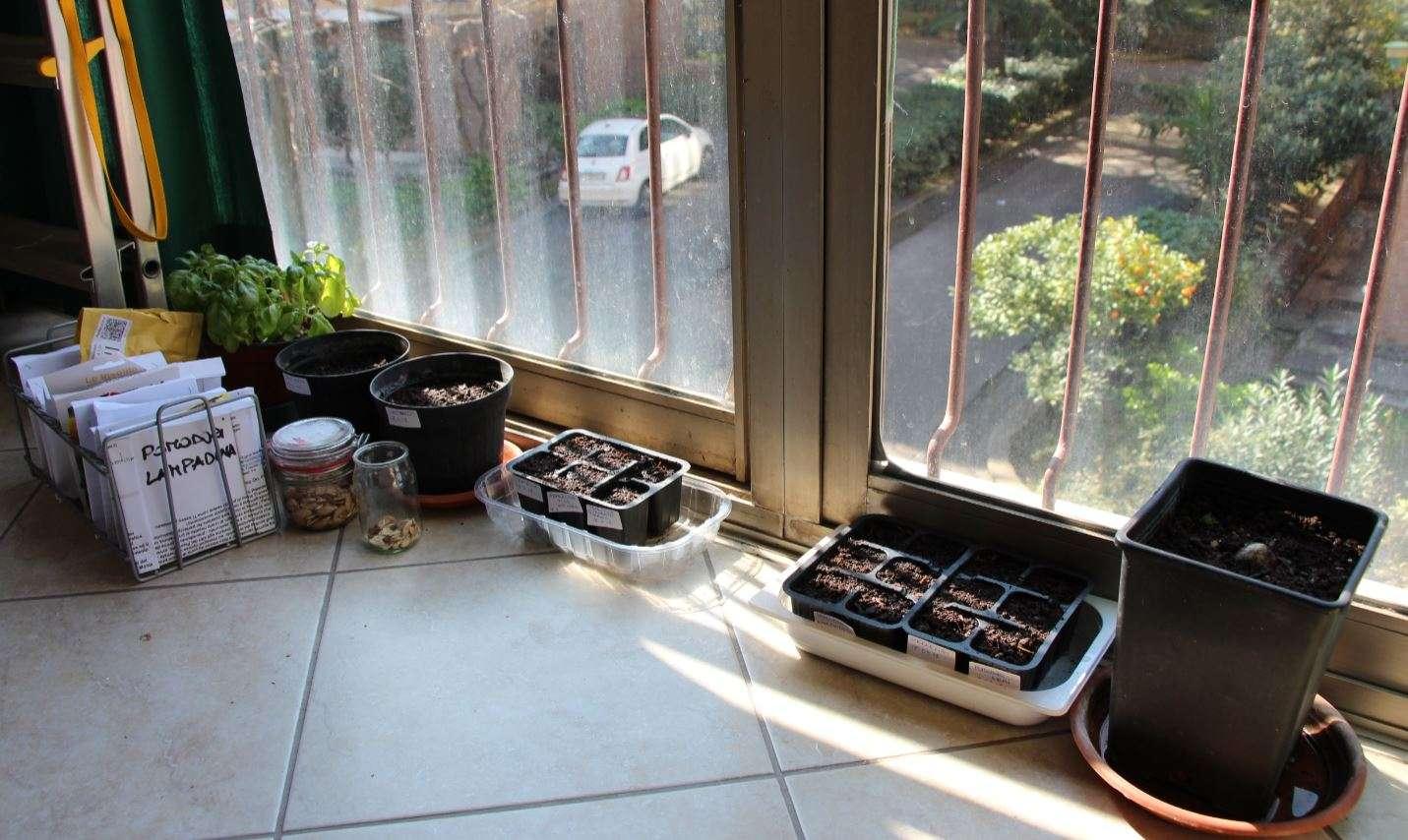 Il mio semenzaio sul balcone