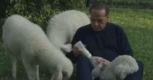 Berlusconi allatta gli agnelli che ha salvato dal macello