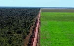campo di soia, Brasile