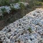 La pacciamatura in lana di pecora