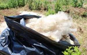 Sacco pieno di lana di pecora