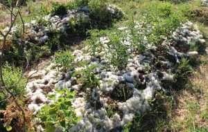 La lana sull'orto con il tempo perderà la sua compattezza